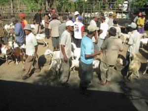 Pedagang kambing di pasar hewan